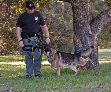 K9 tracking training in Ramona-25