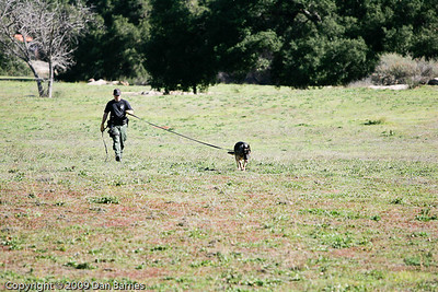 K9 tracking training in Ramona-32