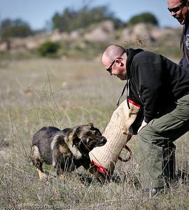 K9 training Wright's field-220