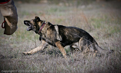 K9 training Wright's field-216