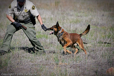 K9 training Wright's field-169