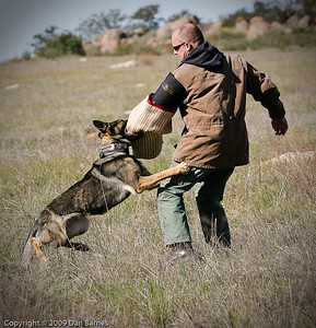 K9 training Wright's field-11