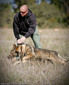 K9 training Wright's field-258