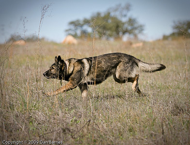 K9 training Wright's field-195