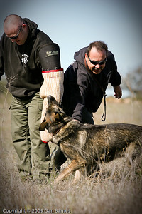 K9 training Wright's field-234