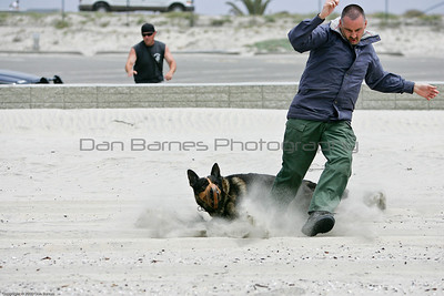 K9 water training 1-5