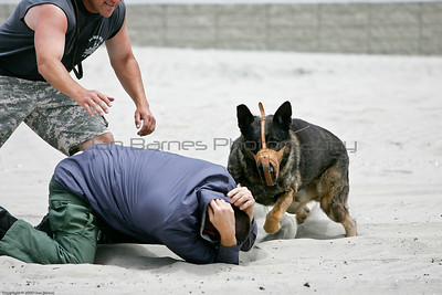 K9 water training 1-12