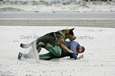 K9 water training 1-7
