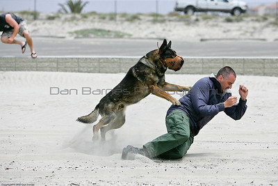 K9 water training 1-6