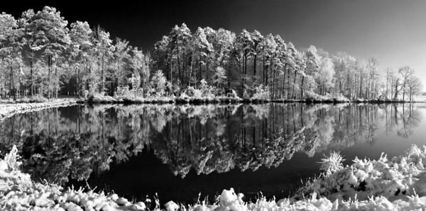 A Snowy Pine Top