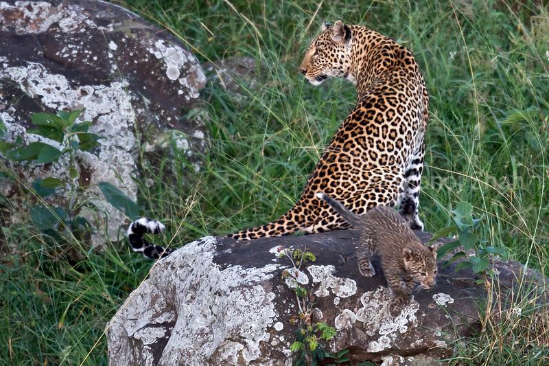 Leopard & cub