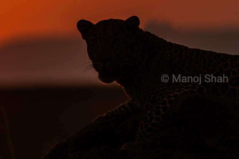Male Leopard on the rocks
