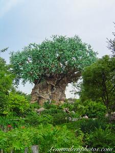 Walt Disney World Resort in Florida