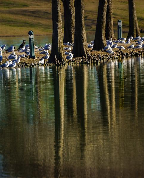 Latson Lake Forest-1.jpg