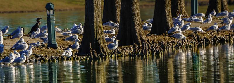 Latson Lake Forest-1-2.jpg