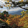 View of autumn colors along high ridges of the Appalachian Mountains near Montreat, North Carolina.  The photograph was taken at the end of a hiking trail above Montreat College, a private Christian college with a history dating to 1897.  The Rev. Billy Graham lives nearby, and he and Ruth Graham were married on campus in Gaither Chapel.