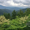 View of flowering foliage and the Great Smoky Mountains range from atop the Gatalinburg Sky Lift viewing area, Gatlinburg, Tennessee
