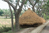 """Most of the rice straw piles at the roadside are just piles. This one has been formed into a neat haystack. The """"thatched roof"""" will keep most of the straw dry."""