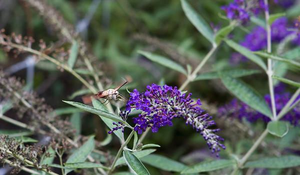 Nature & Landscape Photography