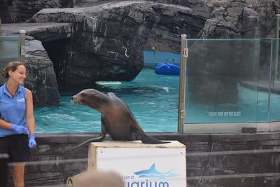 L.I. Aquarium