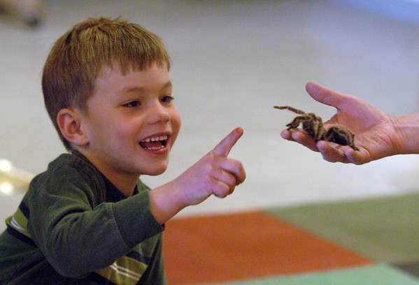 """Aric Olson, 5, gives a high five to the tarantula, held by Jill Dreves.<br /> Emmy winning songwriter, David Williams, is releasing a new CD of songs he wrote with Wild Bear Mountain Ecology Center in Nederland.<br /> For more photos and video, go to  <a href=""""http://www.dailycamera.com"""">http://www.dailycamera.com</a>.<br /> Cliff Grassmick / December 11, 2010"""
