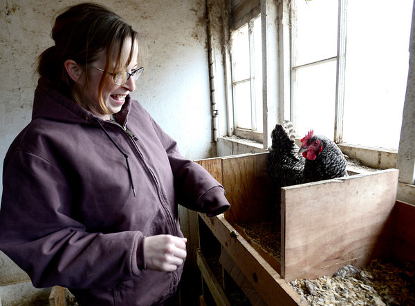 0213CSA2.jpg Dorian O'Connell cringes a little at a feisty chicken while gathering eggs at Jacobs Farm in Boulder, Colorado February 14, 2013.  DAILY CAMERA/ MARK LEFFINGWELL