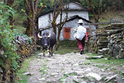 Lisa Marshall Women's Health Womens Health Nepal DAY 3