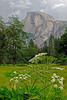 Queen Anne Lace<br /> Half Dome<br /> Yosemite National Park, CA