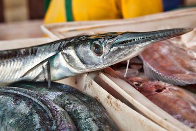 ©2012 KT WATSON Fresh fish at the market, Bangkutien Thailand.
