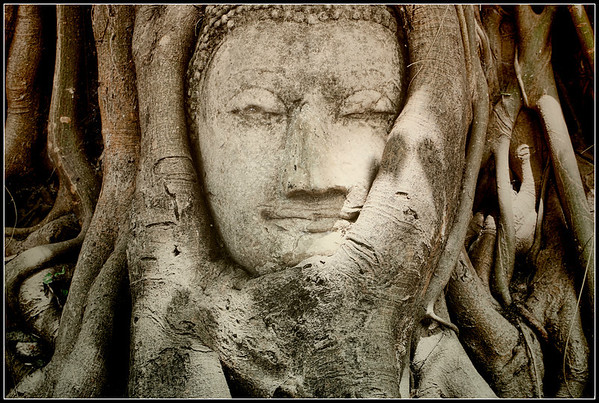 A sandstone Buddha head in the roots of a Banyan tree at the ancient temple of Wat Mahathat (also known as the Temple of the Great Relic) in Ayutthaya , Thailand. UNESCO declared Ayutthaya Historical Park a World Heritage Site in 1991.