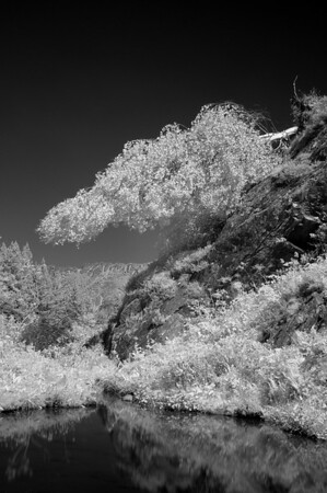 Uprooted Birch, Pyrenees, France. 2013