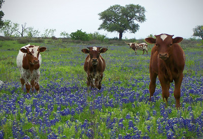 AN014  FUTURE LONGHORNS