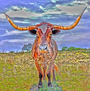 LONESOME LONGHORN SOLARIZED