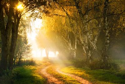 Turning Color | Autumn Path Light Sun Birch Trees Berk Pad Herfst Fotografie Maashorst BernhezeBrabant Netherlands