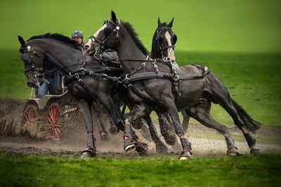 4HP | Slabroekse Paardendagen