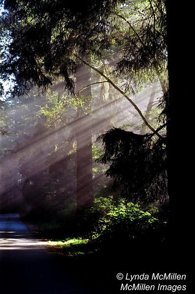 God Rays, Northern California