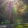 Sunlight rays through trees