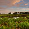 Restored wetlands