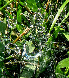 07-29-12 There is so much going in this water droplet haven - love the colors, spider web & stars scattered throughout,