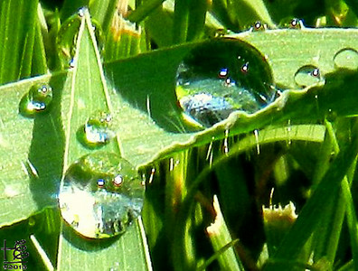 07-29-12 Whoa, this is absolutely surreal - it looks like worlds exist within the two larger water droplets.  I was almost lying down in the grass taking these pictures on Andrews Avenue in Buckhead.  Yes, I am sure a few folks thought I was a bit luney!