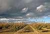 CLEARING STORM, SOUTHERN SAN JOAQUIN VALLEY, CA