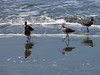 FOUR SAND PIPERS