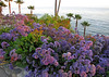FLOWERS LAGUNA BEACH