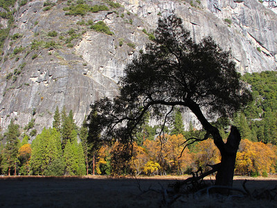 Yosemite 2012 D