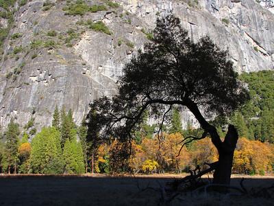 Yosemite Gallery Sixteen