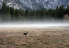 YG16-20 LONELY DEER, AHWAHNEE MEADOW