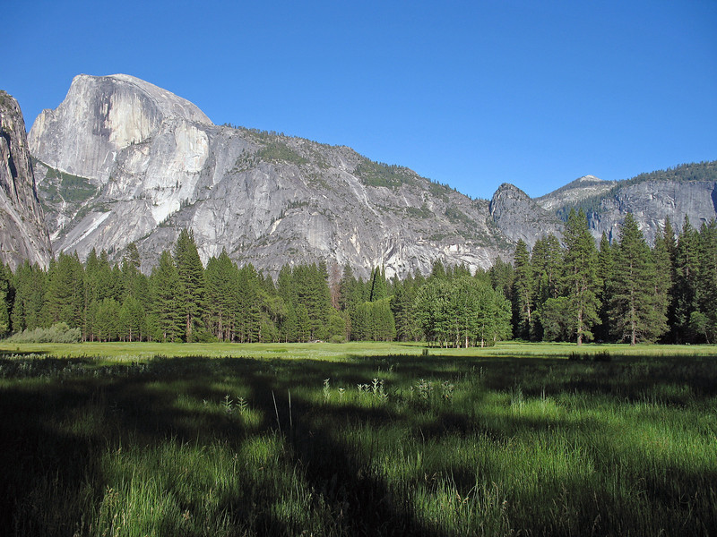 YG5-1 FROM AHWAHNEE MEADOW