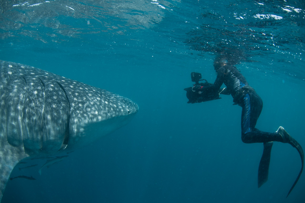 WHALE SHARK UP CLOSE