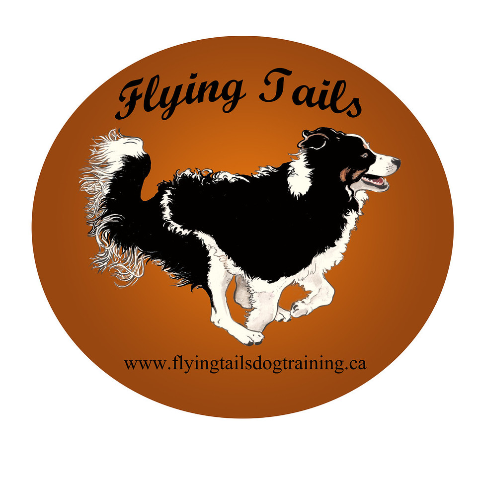 "Watch us on Facebook, <a href=""http://www.facebook.com/pages/Flying-Tails-Dog-Training/125448014139638"">http://www.facebook.com/pages/Flying-Tails-Dog-Training/125448014139638</a>, and YouTube, <a href=""http://www.youtube.com/user/FlyingTailsDogTrg"">http://www.youtube.com/user/FlyingTailsDogTrg</a>."