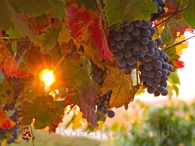 Livermore Harvest Sunrise Image I.D. #:  V-07-005